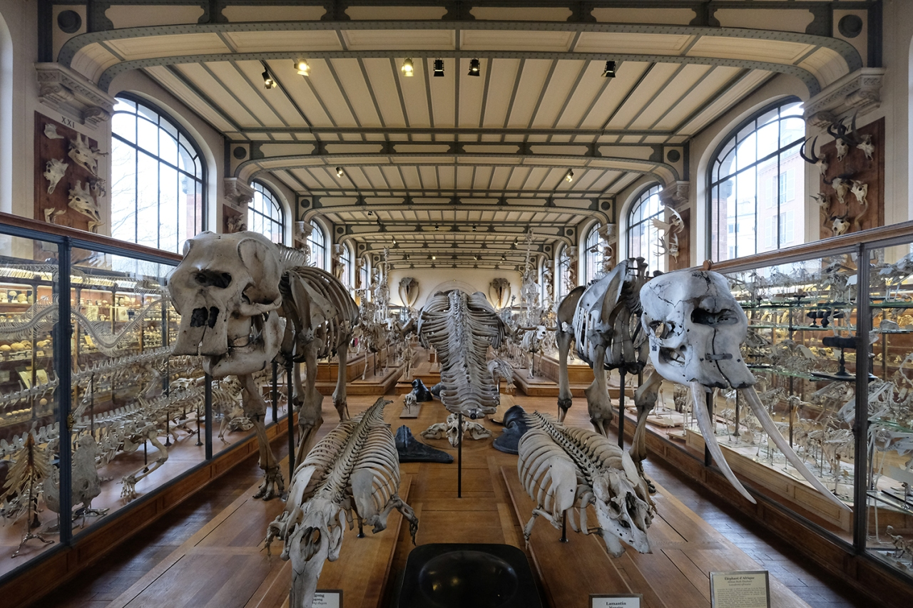 Museum of Natural History\'s Gallery of Paleontology and Comparative ...