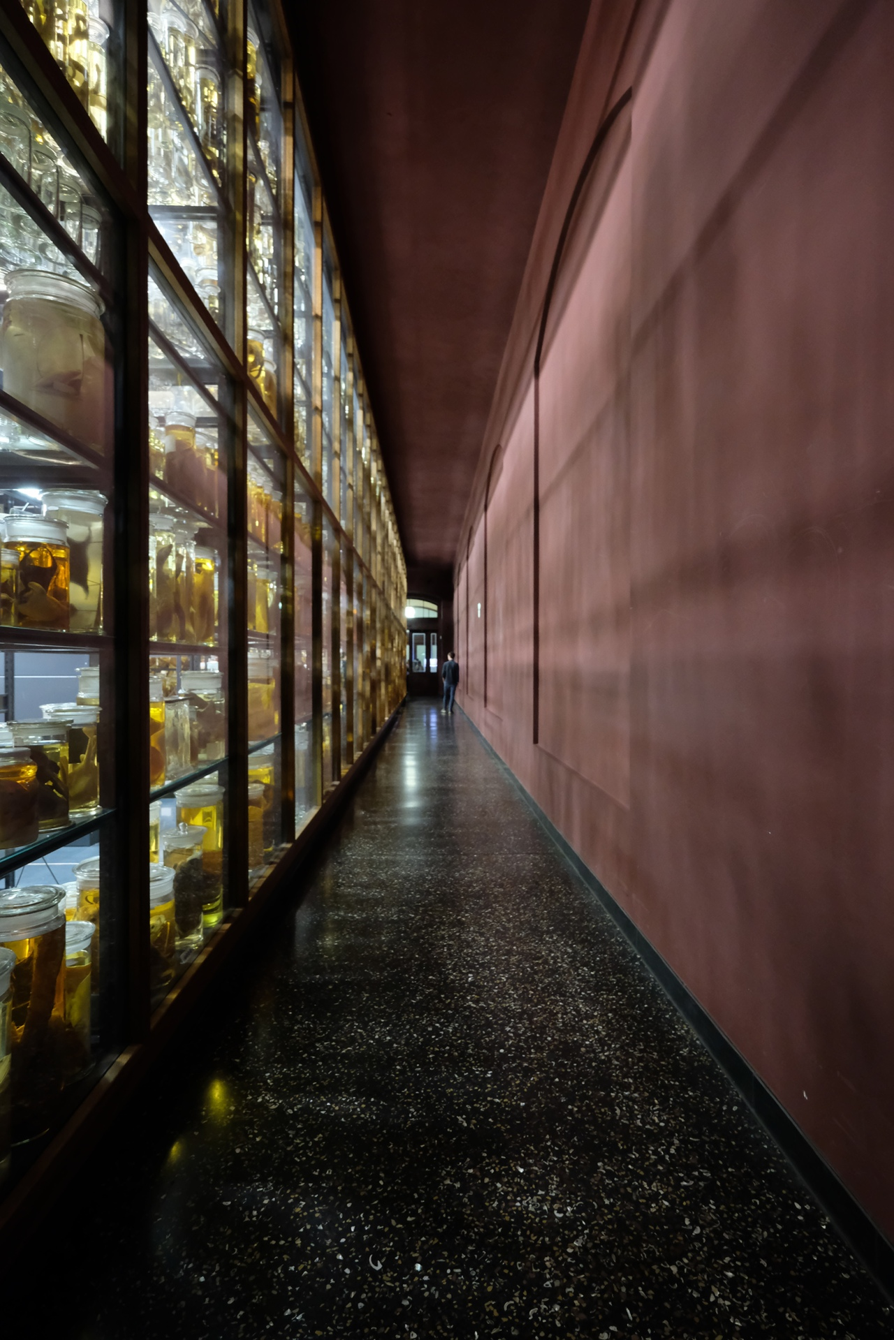 Berlin_Natural_History_Museum_East_Wing_JLY_03